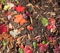 Fall's end, Central Park, NY